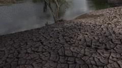 4K Tree Cracked Earth Receding Water - stock footage