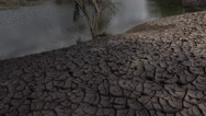 Stock Video Footage of 4K Tree Cracked Earth Receding Water