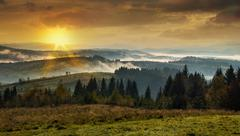 coniferous forest in the high mountains at sunset with a dense fog. - stock photo