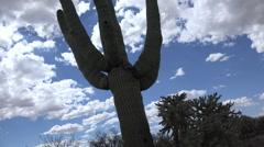 4K Saguaro Cactus Glides Through Arizona Desert Slider Time Lapse Stock Footage