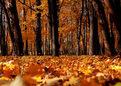bright colors autumn trees. Autumn landscape. - stock photo