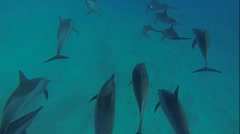 Dolphins with a scuba diver Stock Footage