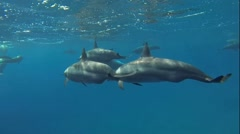 Dolphins surface Stock Footage