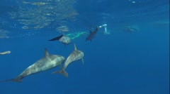 Swim and with many dolphins Stock Footage