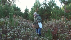 Woman collects mushrooms in thorny grove Stock Footage