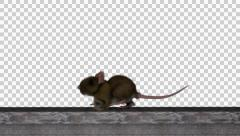 Rat 3D Model Lower Thrid With Alpha Channel Stock Footage