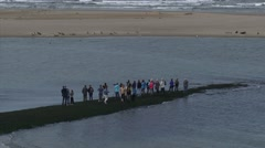 Spectators on a groyne watching seals at the Dutch coast + zoom out Stock Footage