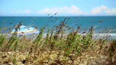 Common reeds rocking in the wind at the seaside under a cloudy blue sky. Stock Footage