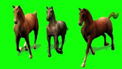 Galloping Horses Green Screen Shadow 1080 Stock Footage