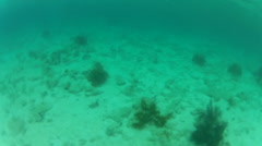 Man dives down while snorkling Stock Footage