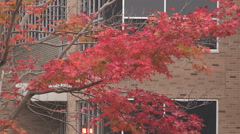 Spectacular fall colors in Markham Ontario Stock Footage