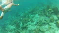 Snorkeler Explore the Virgin Island Coastal Reef Stock Footage