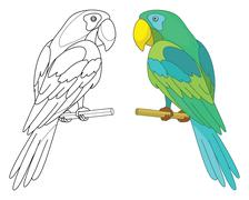 Bird parrot on a perch Piirros