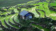 Zoom Out - Above View of Farm with Rice Terraces in Valley Sapa Vietnam Stock Footage