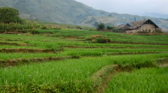 Zoom Out of Farm with Rice Terraces in Valley Sapa Vietnam Stock Footage