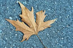 Stock Photo of Fall  Leaf 2