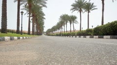 nice asphalt road lined with palm trees - stock footage