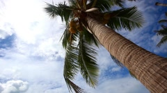 Palm tree with coconut  on blue sky Stock Footage