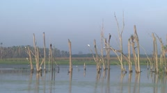 Florida Wetlands Stock Footage