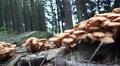 Wood and Tree Fungi low angle closeup panning HD Footage
