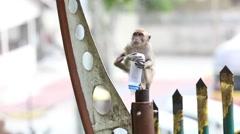 Monkey at Batu Caves Stock Footage