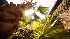 Palm tree in summer - stock footage