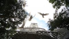 Wedding doves Stock Footage