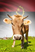 cow with flag on background series - angola - stock illustration
