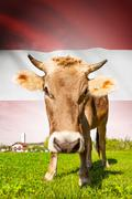 cow with flag on background series - austria - stock illustration