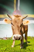 cow with flag on background series - dominica - stock illustration