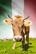 cow with flag on background series - italy - stock illustration