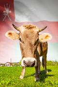 cow with flag on background series - oman - stock illustration
