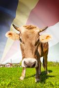 cow with flag on background series - seychelles - stock illustration
