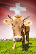 cow with flag on background series - switzerland - stock illustration
