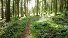 Road in summer beautiful forest. Stock Footage
