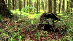 Large tree stump in summer forest - stock footage