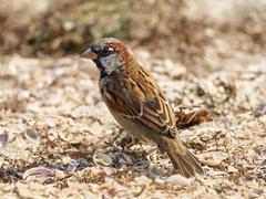 little sparrow on a sand. - stock photo