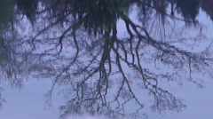 Blue Pond - Tree Reflection - stock footage