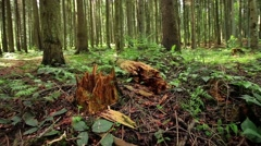 Broken tree in the forest Stock Footage