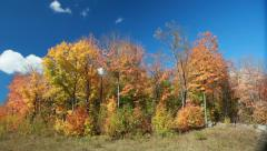 Stock Video Footage of Fall Colors (Colours) 3 in a Northern Canadian Forest