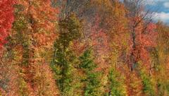Stock Video Footage of Fall Colors (Colours) 11 in a Northern Canadian Forest