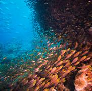shoal or school of tropical fish - stock photo