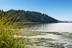 Private beach with puget sound view, burien, wa Stock Photos