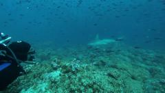 Diver watching hammerhead sharks - stock footage
