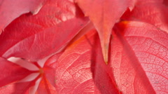 Autumn fall leaves natural background - stock footage