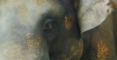 Close up portrait of elephant head, skin details texture and eyes closeup view Stock Footage