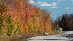 Fall Colors (Colours) 8 in a Northern Canadian Forest Stock Footage