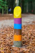 painted marking in a dutch forrest - stock photo