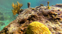 A view of a reef near the United States Virgin Islands - stock footage