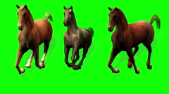 Galloping Horses Green Screen Shadow and ALPHA Stock Footage